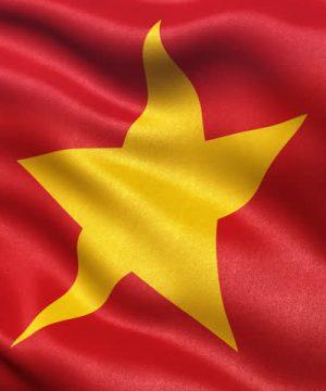 Buy Hamer Ginseng Coffee Candy Shop Vietnam