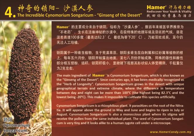 hamershop-blog